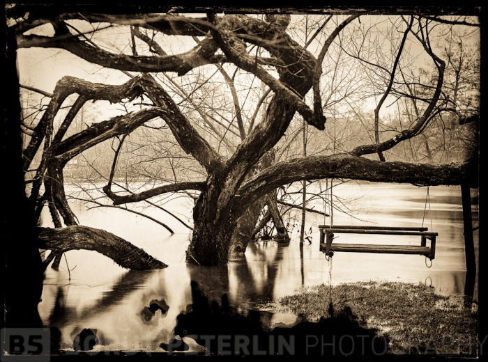 """A flooded tree by river Krka. This is a digital scan from Wet Plate Collodion negative, format 5x7"""". Photograph taken with (modified) Plaubel Peco camera and Voigtlander Heliar 300mm, f4.5, lens. Exposure 10 seconds at f/16."""