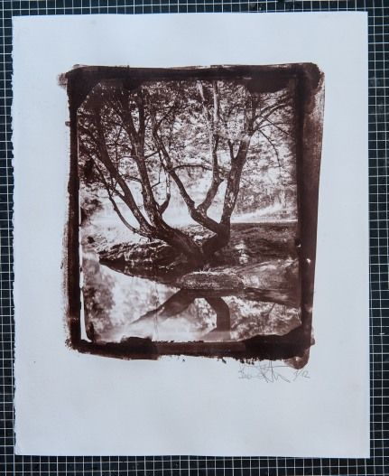 Salt print from redeveloped wet plate collodion negative, format 40x50 cm.