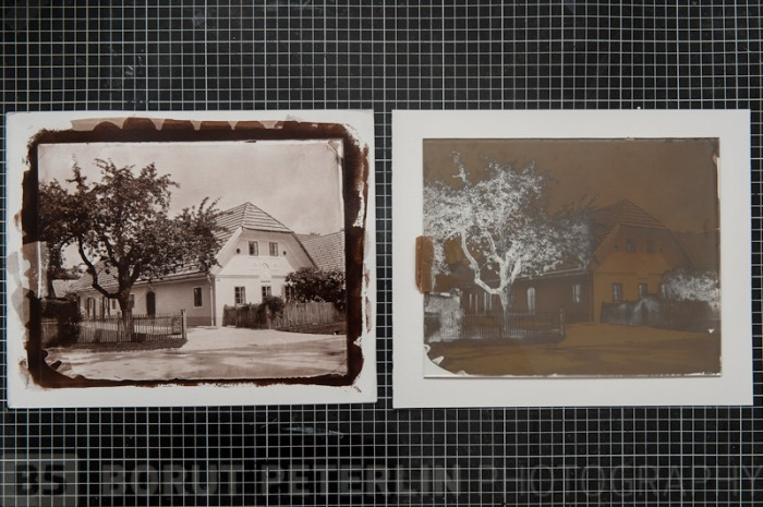 """Salt print from a 8x10"""" wet plate collodion negative, toned with gold chloride."""