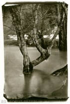 My third carbon print from my own wet plate collodion negative. No air bubles in this one :-)
