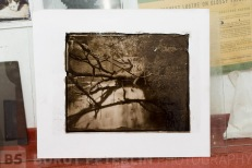 "Carbon Print from 8x10"" wet plate collodion negative."