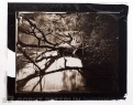 Carbon print from a wet plate collodionnegative