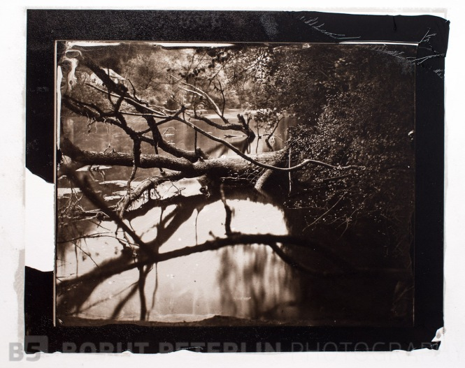 Carbon print from a wet plate collodion negative