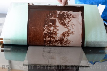 Albumen print during exposure still unwashed untoned, unfixed.