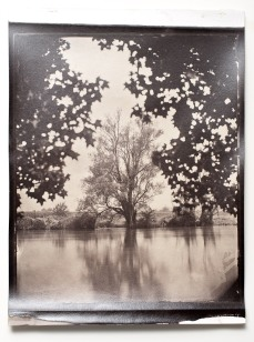"An albumen print toned with gold from a wet plate collodion negative format 10x12"". River Krka, Straža, Slovenia, EU."