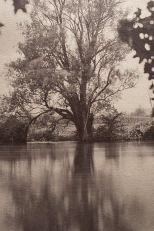 A detail of the albumen print