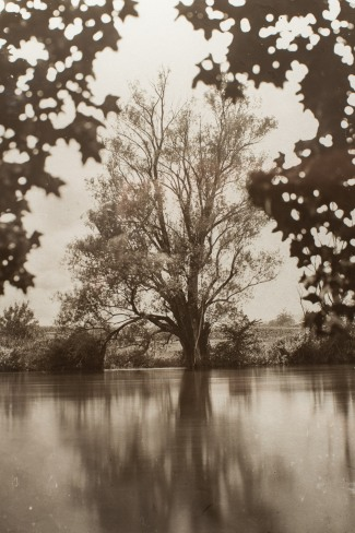 """A detail of the carbon print on glass from a wet plate collodion negative format 10x12"""". River Krka, Straža, Slovenia, EU."""