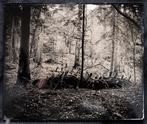"An ambrotype format 10x12"" (25-30cm)."