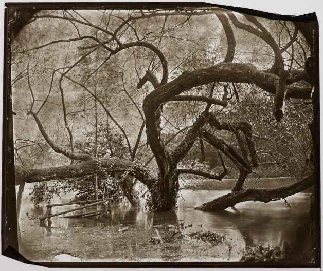 "A carbon print on glass, contact copied from a (manipulated) wet plate collodion plate, format 10x12""."