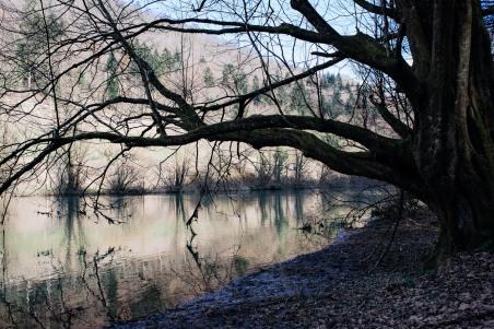 Riverbank of river Krka. Photo Tomo Vrešak