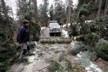 Finally the tree was cut and pulled out of the way. Photo Bojan Brecelj