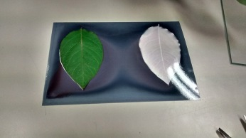 lumen print with a leaf and with a photogram.