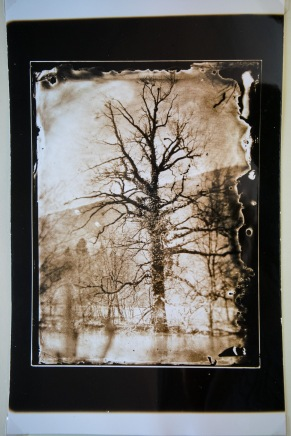 Silver chloride gelatin paper, a contact copy from my collodion negative.
