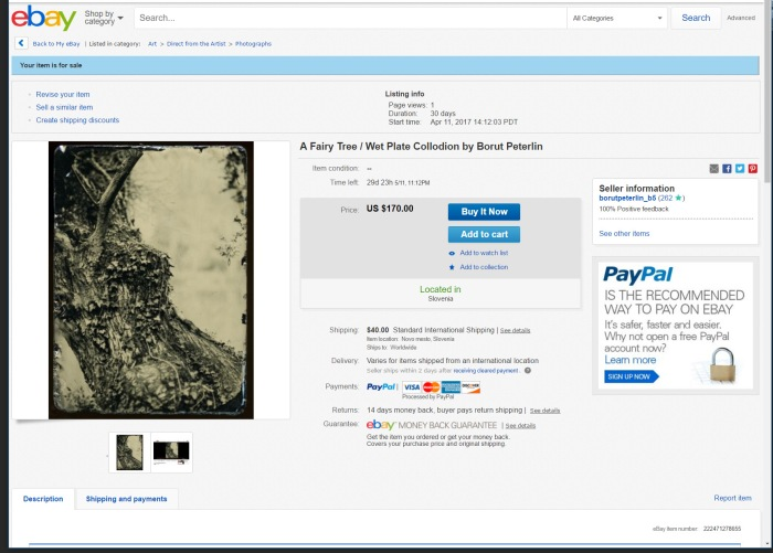 ebay-tree-5x7